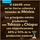 Producción cacao en Mexico